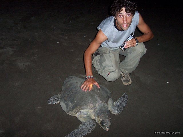 Egg-laying of turtles - Island of Cañas