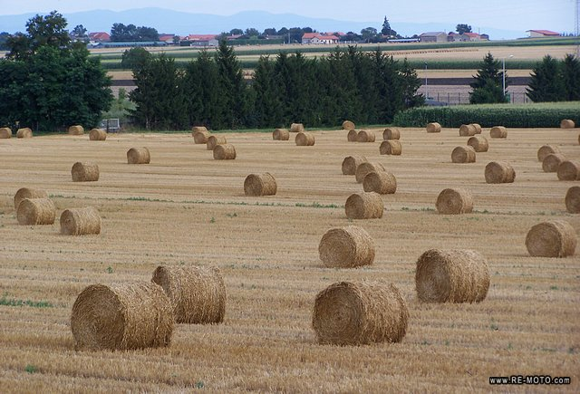 The beauty of the hay bales, despite the sinister destiny of those whom they serve as food.