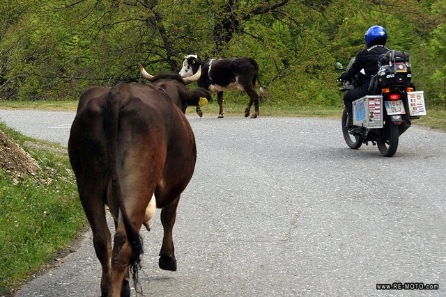 "Travelling at ""cow velocity"""